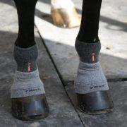 Incrediwear-Equine-CirculationSocks-2
