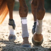 Incrediwear-Equine-Leg-wrap-1